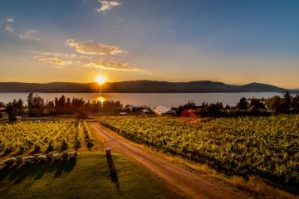 Summerhill-Pyramid-Winery-Sunset say high to okanagan tours